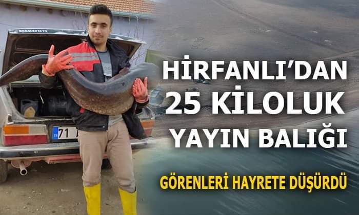 SANKİ KÖPEK BALIĞI !!